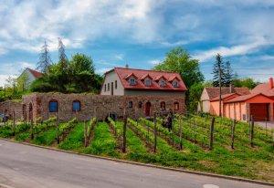 Vinařství Lintner, Tvořihráz